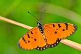 Orange Butterfly by Tratong @ DreamsTime
